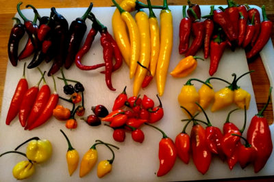 Many different kind of chili, Chili peppers cuts risk of death from heart attack and stroke