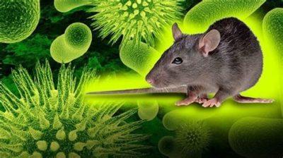 Health, Health Guide, Physiology Topics, After Coronavirus The Deadly Hantavirus in China